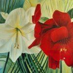 amaryllis rood en wit met palmblad